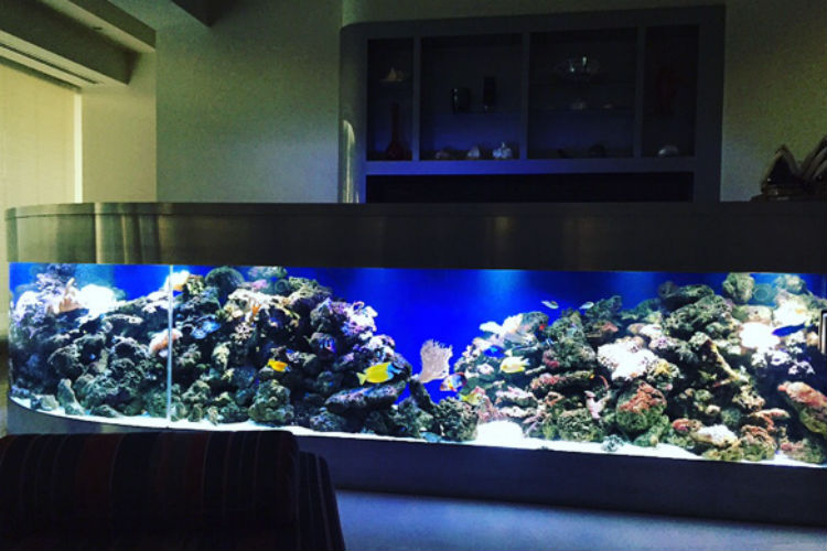 Gallery effortless aquaria home of sydney s for Custom made fish tanks